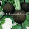 radish seed extract , water soluble black radish extract powder