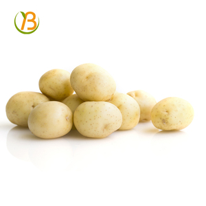 frozen potato and holland potato price with packing plastic bags price for potato