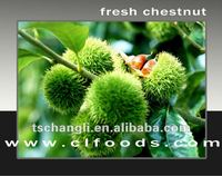 fresh chestnut 2012 new crop