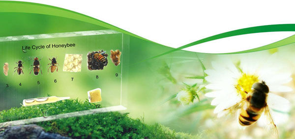 Qianfan 6 kinds of Beneficial,pest Insects collection