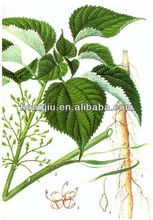 Chinese Herb Ramie Extract Powder