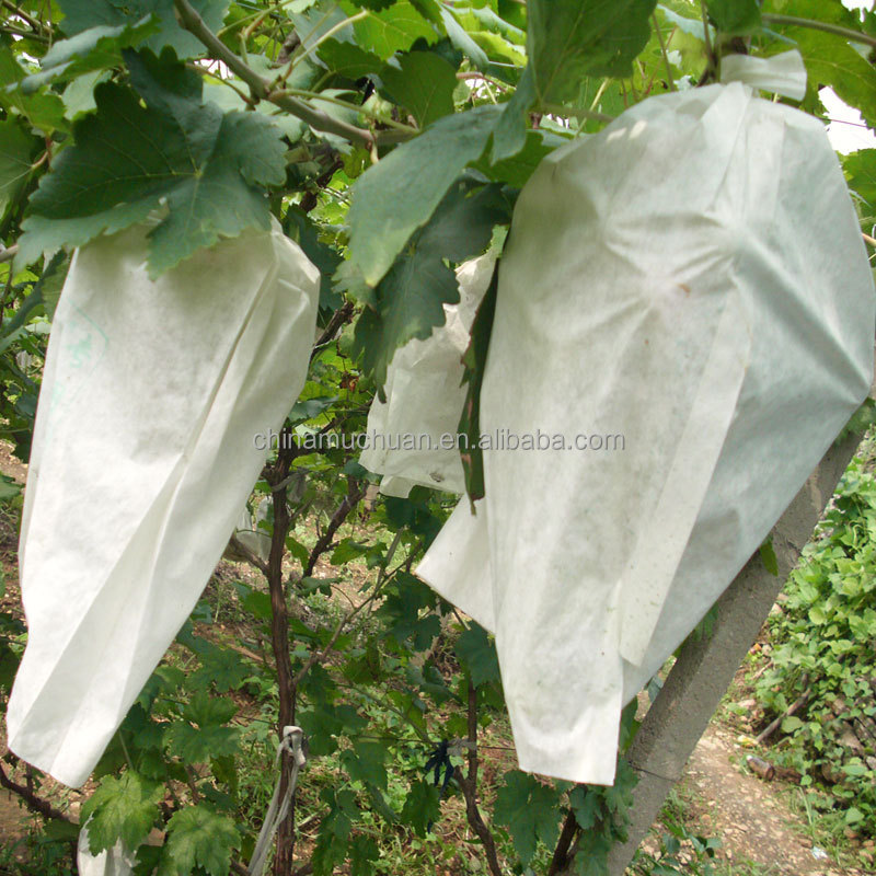 grape protection growing white paper bag