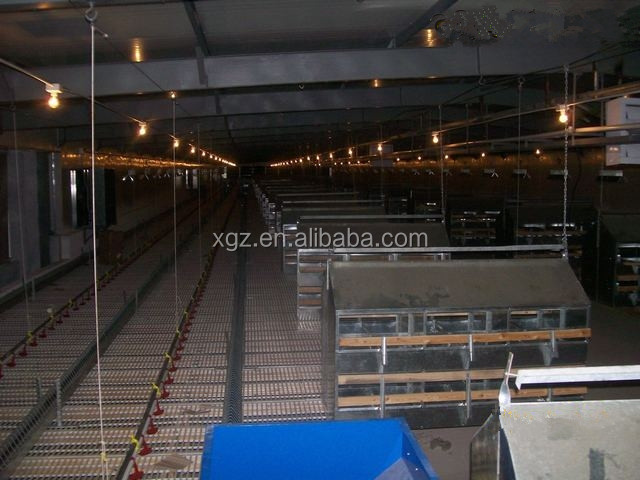 modern low price automatic chicken poultry farms