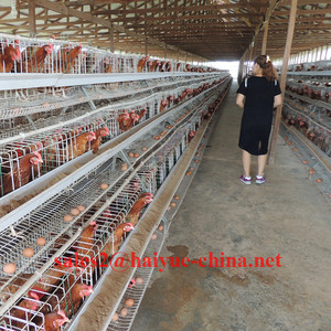 TAIYU Poultry Battery Cage For Nigerian Farm With Warehouse In Ibadan