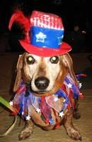 pet hats-Uncle Sam