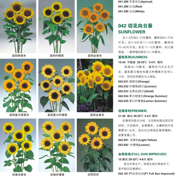 charming growing sunflowers from seed Part - 13: charming growing sunflowers from seed gallery