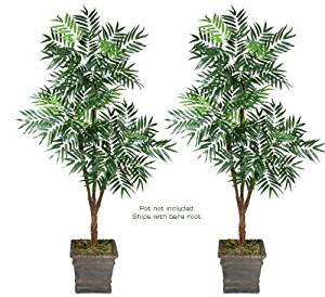 Two 6' Phoenix Tripled Artificial Trees Silk Plants, with No Pot, Minor Assembly Required.
