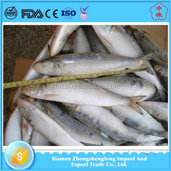 Best canned frozen sardine fish in fish for myanmar market for Best frozen fish