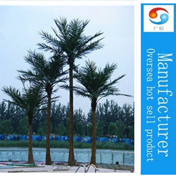 Outdoor/Large Date Palm Tree
