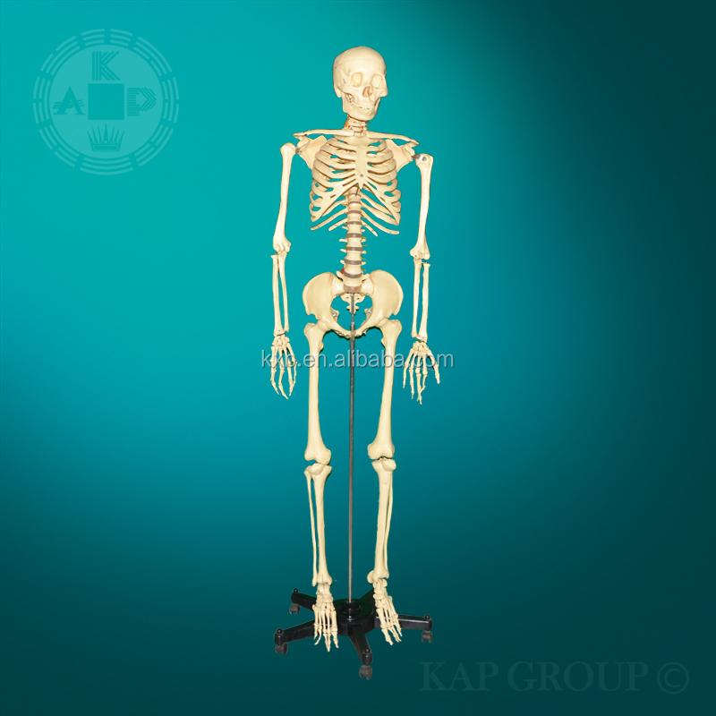 Precio Al Por Mayor Músculo Esquelético Cartel,3d Esqueleto Carta ...