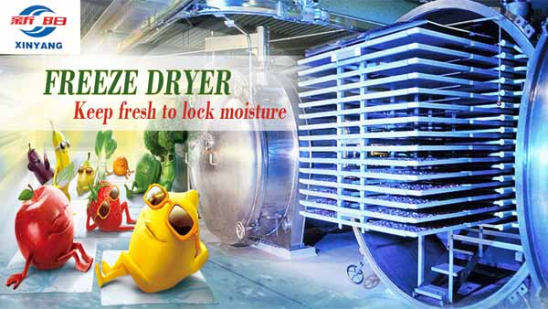 Top Sell Fruit Vegetable Lyohililizer Of Freeze Drying