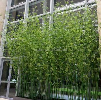Piante Per Recinzioni Giardino.Piante Ornamentali 2016 Bambu Artificiale Decorazione Di Bambu