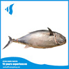 Canned tuna from china yellowfin tuna for light seining
