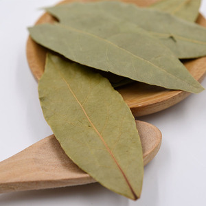 Bay Leaves / Natural Bay Laurel Leaf Extract Powder/Dry Bay Leaf, Myrcia hot sale
