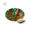 Bright yellow Seabuckthorn fruit extract powder seabuckthorn powder
