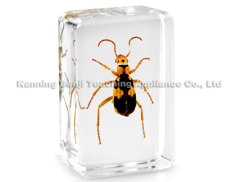 Giant Forest Scorpion Large Size Insect Specimens In Lucite Paperweight Crafts