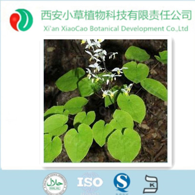 GMP high quality Natural Penis Erection Epimedium P.E extract power