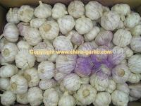 Garlic Farming For Sale