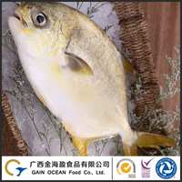 Best Quality Seafood Product Frozen Whole Golden Pompano Fish