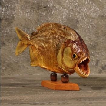 Red Bellie Taxidermy Piranha