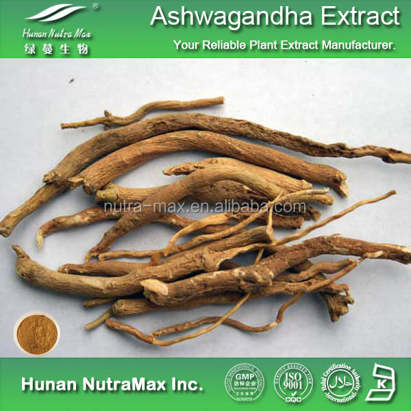 Get Free Sample Top Quality Ashwagandha Price , Ashwagandha Powder Withanolides 1.5% 2.5% 3% 5%
