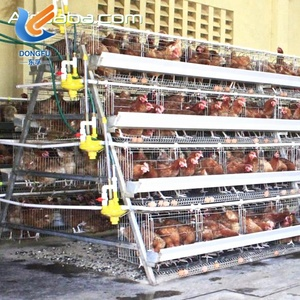 Dimension For 1000 Chicken Layer Cage