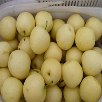 Chinese fresh new crop Fragrant pears