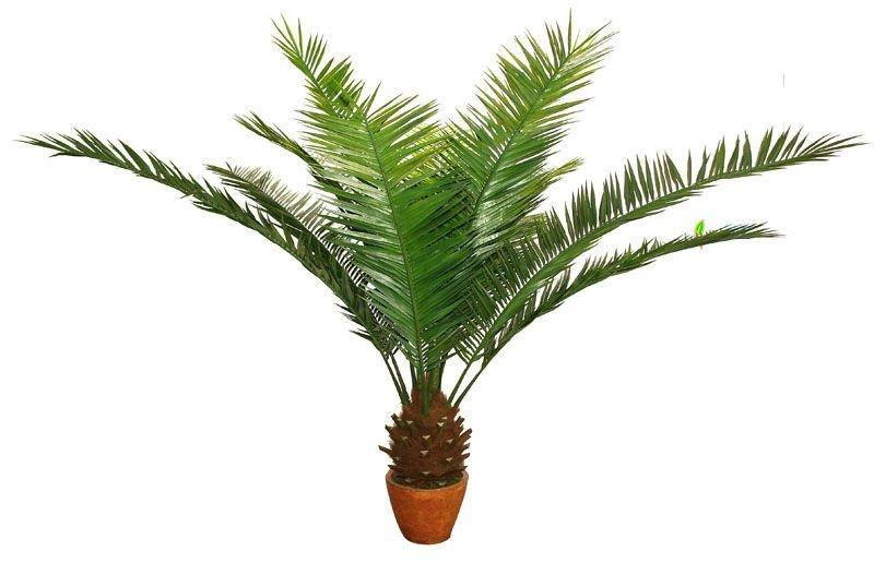 Petit artificielle date palmier arts collection id de produit 462792403 - Type de palmier ...