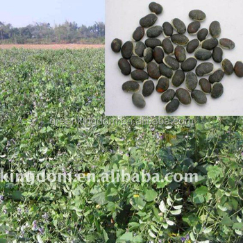 Super Good Quality Lablab Bean Seeds