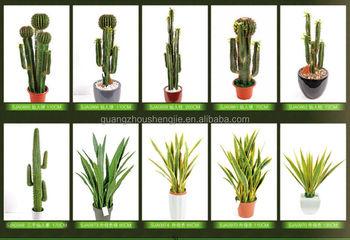 Cactus house plants pictures