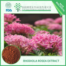 New product China supplier Rhodiola rosea extract 5% Salidroside free sample