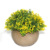 2017 Artificial plant primitive contemporary home decor