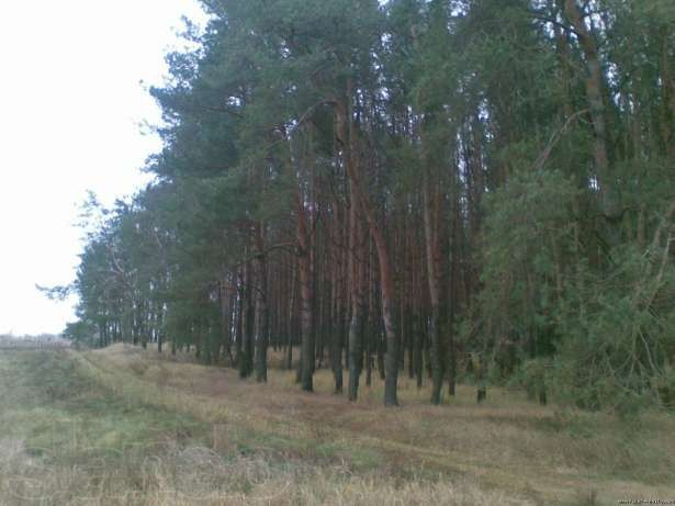 Agricultural Land for Sale, Kievo Svyatoshinskiy area, Kiev Region, Ukraine