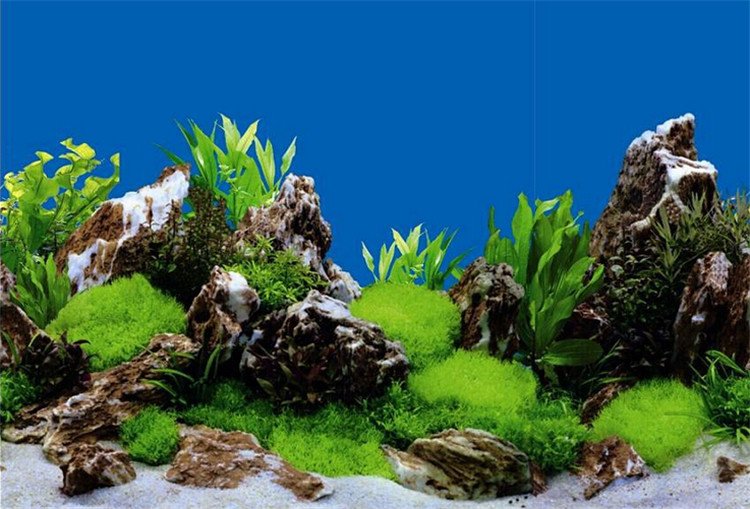 Aquarium Fish Tank Backdrop And Background Paper Reptile Vivarium Marine Product On