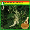 Pure Natural Black Cohosh P.E./Black Cohosh Herb Extract