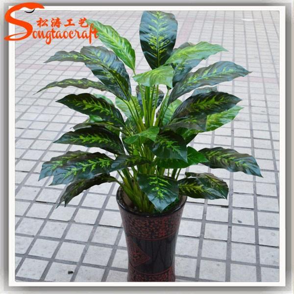 nomi di piante vasi per le piante di plastica piante