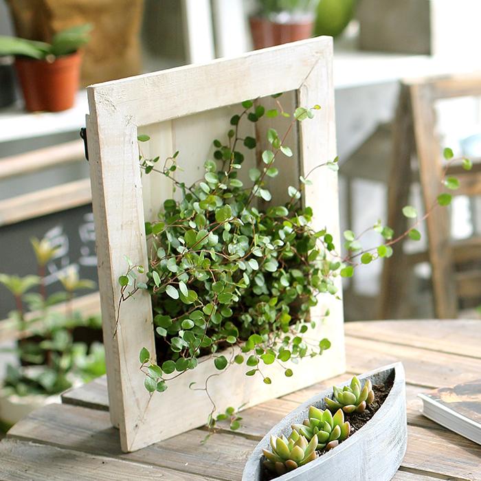 Popular Wall Hanging Flower Pots-Buy Cheap Wall Hanging