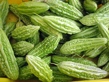 Fresh Vegetable Bitter Quard Supplier In India - Buy Fresh Vegetable Bitter  Quard More Cultivation In India Product on Alibaba com