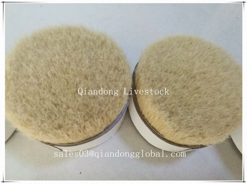 Hot Selling 60%-90% Pig Pure Boiled Bristle of Brushes Raw Material