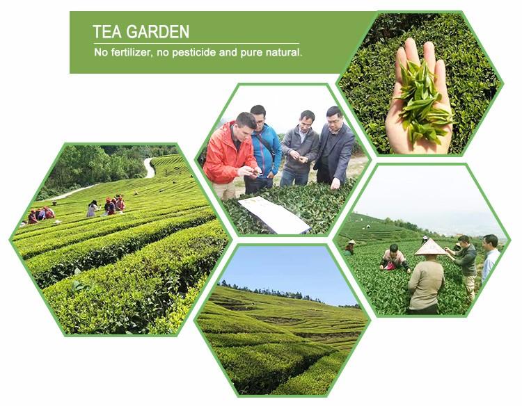 100% Natural White Peony, famous white tea in China - 4uTea | 4uTea.com