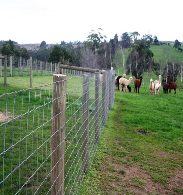 Alibaba Pig Wire Fence Lowes Hog Wire Farm Fencing - Buy Wire Farm ...