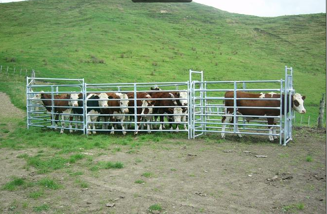 Cheap Cattle Panels For Sale View Heavy Duty Corral