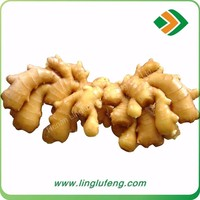 Farmer Ginger Low Market Prices Chinese Fresh Ginger Air Dried Ginger