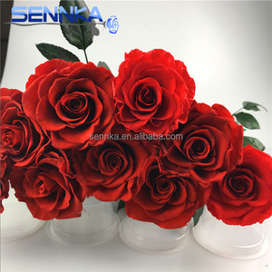 Organic Everlasting Rose Flower A Grade Preserved Rose with Long Stem