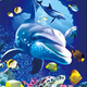 Wholesale stunning animal dolphin 3D lenticular picture amazing deep effect 3D flip picture naked picture