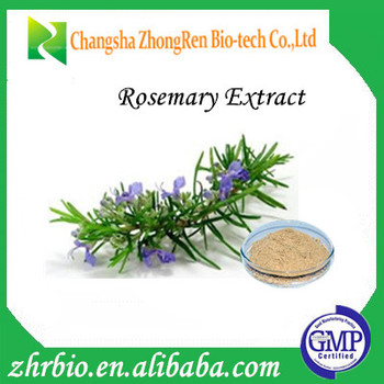 Manufacturer Supply Rosemary Extract Carnosic Acid/ Rosmarinic ...