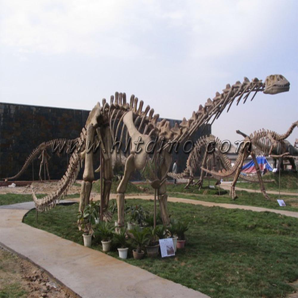 Hlt Exposición Uso Dinosaurio Esqueleto De Dinosaurio Real - Buy ...