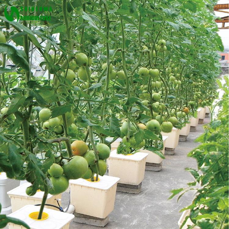 Hydroponics Weed Dutch Keg Grow Pot Bucket System Buy