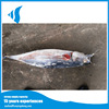 New arrival Frozen yellowfin tuna for Canned food Thunnus albacares