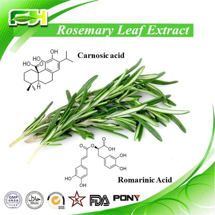 Pure Natural Rosemary Extract Carnosic Acid,Carnosol